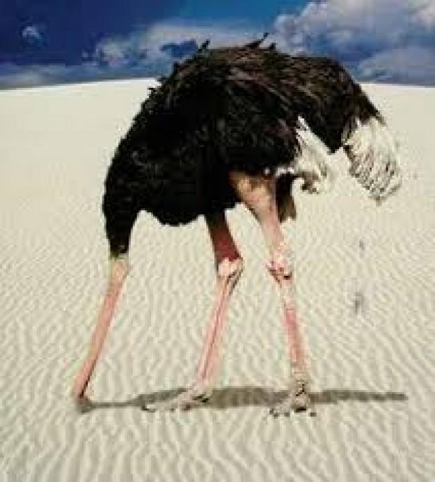 El avestruz, por Carlos Ortíz de Zárate