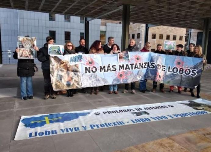 Organizaciones ambientales de Asturias, Cantabria y Castilla y León reclaman la paralización de los controles de lobos