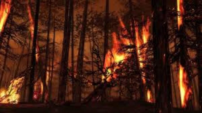 Equo Asturias: Hay que acotar los montes quemados