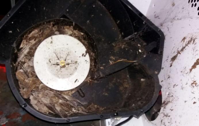 Cerca de 40 pájaros obstruyen una campana extractora en Pernús