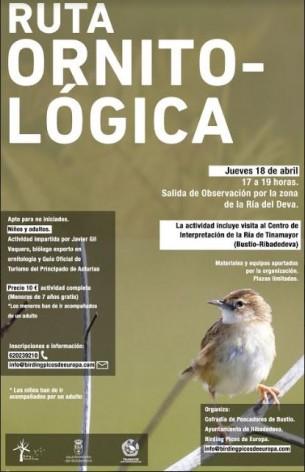 Ruta ornitológica en Ribadedeva