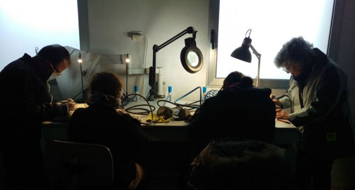 Semana de la Ciencia en el Museo del Jurásico de Asturias