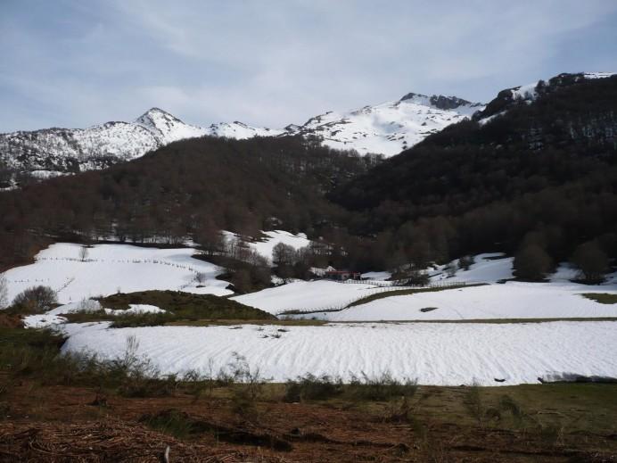 Se teme por la suerte de la osezna Saba liberada en Picos de Europa